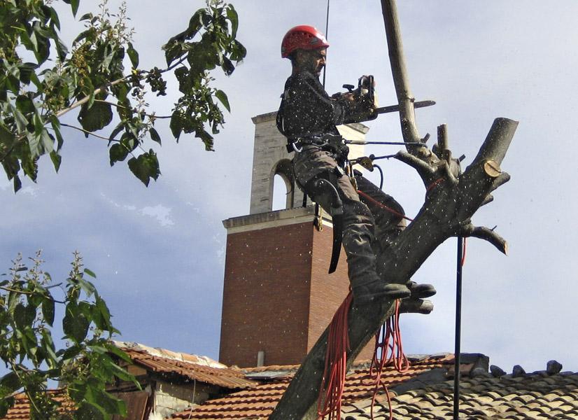 Operatore intento nell'abbattimento di un albero ad alto fusto