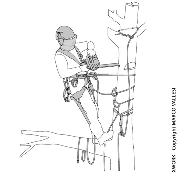 Vignetta che illustra un addetto lavori in fune impegnato nel taglio di un albero