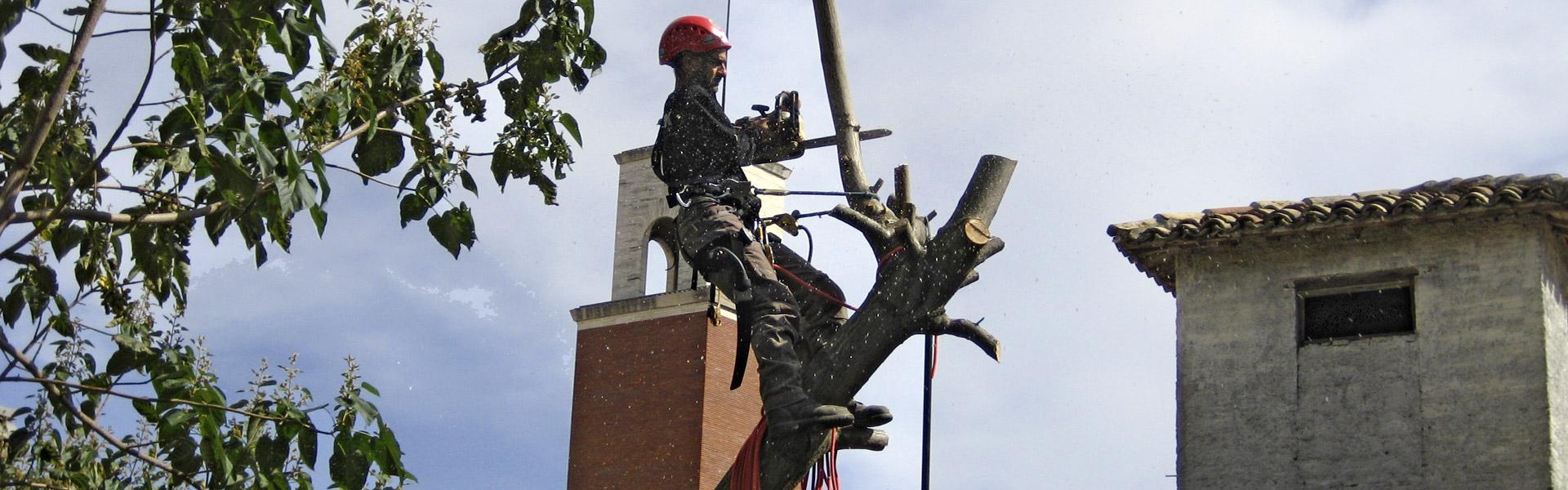 Marco Vallesi intento nell'abbattimento di un albero ad alto fusto.